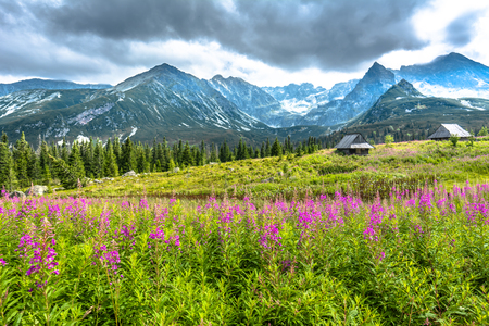 Countryside mountain hut on meadow with flowers in the summer, landscape Stock Photo