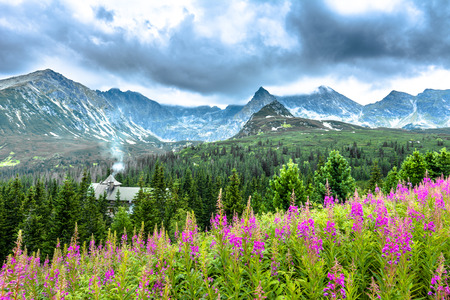 Landscape of mountain flowers in the summer, countryside scenery in mountains with hut in the forest