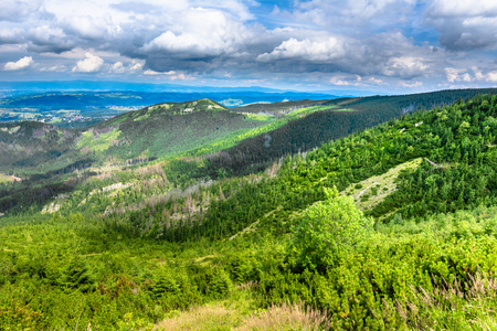 Pine forest on green hills in Tatra Mountains, landscape, Poland