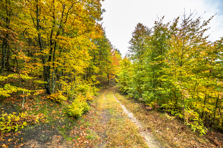 Path in autumn forest, fall landscape