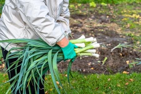 Female farmer holding freshly harvested vegetables, harvest in the garden, local farming concept Standard-Bild