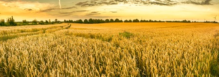Golden Weizenfeld und Sonnenuntergang Himmel, Landschaft der landwirtschaftlichen Getreide Kulturen in der Ernte Saison, Panorama Standard-Bild - 84284169