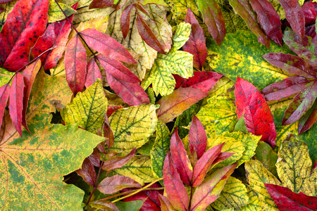 Autumn leaves wallpaper, fall backgrounds Stock Photo