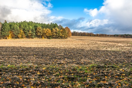 Plowed field in autumn, landscape with forest and yellow trees