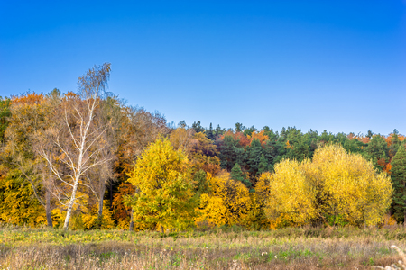 Sunny forest in autumn, landscape with colorful trees and blue sky Stock Photo