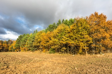 Landscape of autumn field with plowed soil, agricultural scenic view with yellow trees and cloudy sky Stock fotó