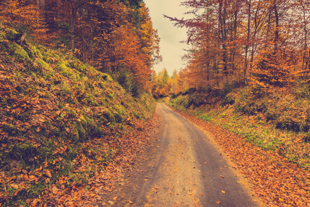 Road in autumn forest or path in nature at fall, landscape