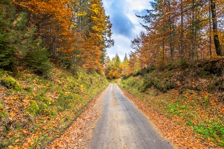 Forest and country road, nature in autumn, landscape