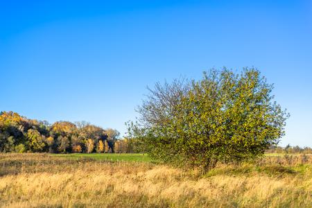 Toneellandschap van de herfst, landschap met eenzame boom op gebied en blauwe hemel