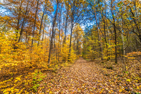 Landscape of autumn forest, road with fallen leaves, landscape