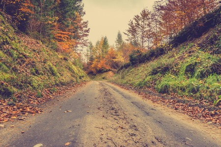 Oktober landscape of road in autumn forest, path in nature at fall, image toned