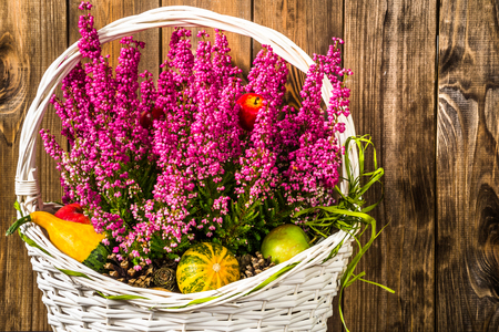 ericaceae: Flower of heather in the basket, autumn flowers background, shabby chic rustic pattern