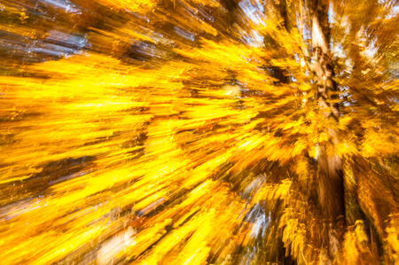 Natural autumn wallpaper with abstract blurry background Banco de Imagens