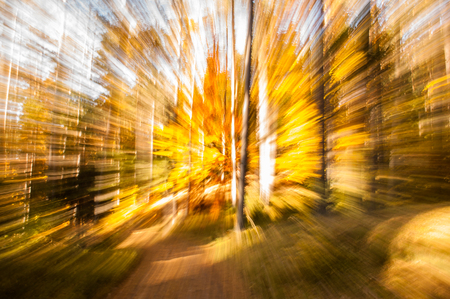 Natural autumn wallpaper with abstract blurred motion