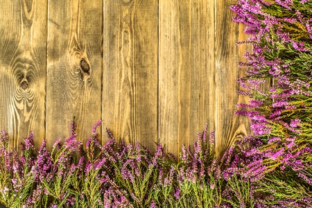 Heather flowers, autumn background, floral frame Stock Photo - 85013396