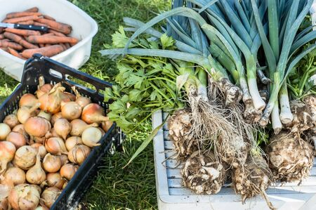 Assorted vegetables, organic farming concept