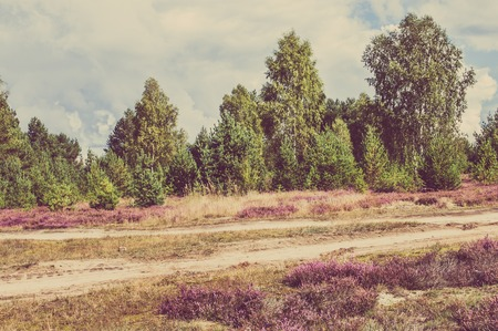 Countryside landscape with heather flowers in the forest at the road