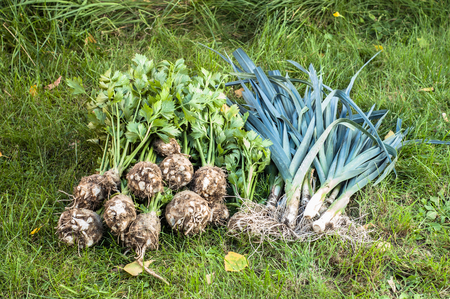 Assorted vegetables, organic farming concept