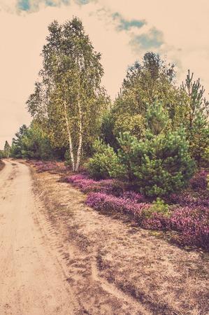 ヘザーの花の道の森の中の田舎風景