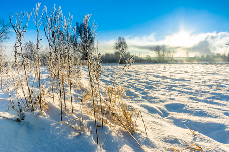 Landscape of winter field covered snow and high grass