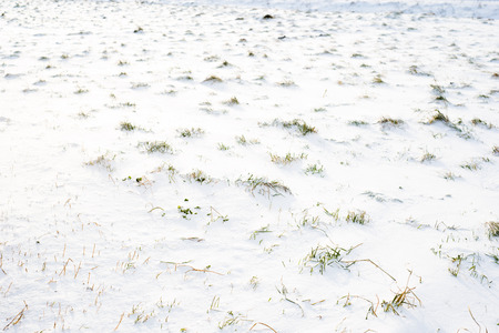 Background of snow on field in winter, texture Zdjęcie Seryjne