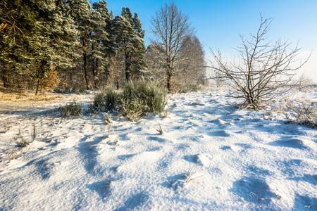 겨울 풍경 눈이 덮여 필드와 숲