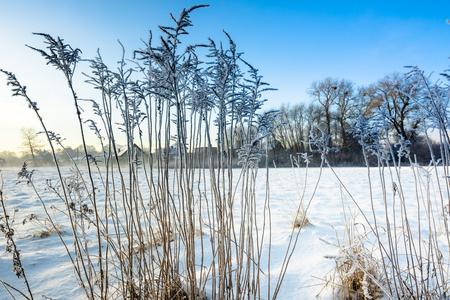 눈 속에서 높은 잔디, 서리 겨울 풍경, 시골 장면 스톡 콘텐츠