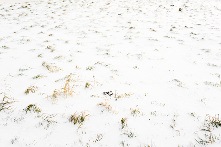 Field in snow, background, winter texture