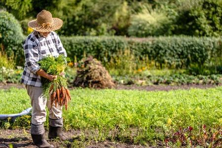 Femme jardinière tenant des carottes fraîches du jardin, légumes issus de l'agriculture locale, produits biologiques récoltés à l'automne, mode de vie sain, mode de vie