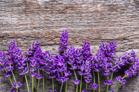 Lavender flowers, frame background, flat lay from above Stock fotó