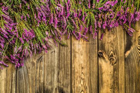 ヘザー花, 秋の背景, 花のフレーム 写真素材