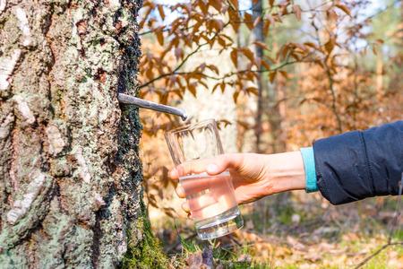 白樺のジュース、春の食事と健康的なライフスタイルのコンセプトの収集 写真素材