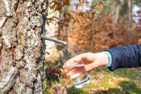 白樺樹液、春ダイエットや健康的なライフ スタイルのコンセプトの収集