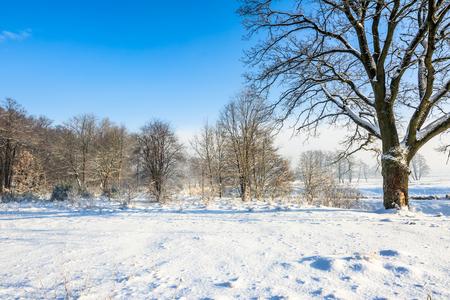 눈과 푸른 하늘에서 겨울 공원의 풍경