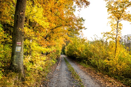 Golden forest in autumn, scenic landscape with path between autumnal vibrant colors of nature at fall Stock Photo - 88244623