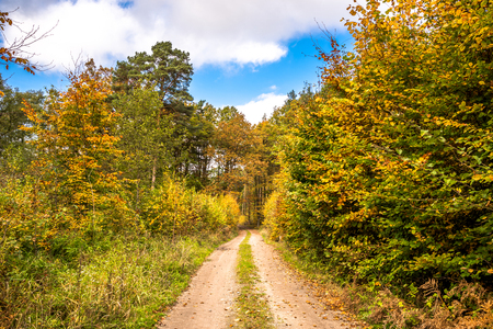 Scenic forest in autumn, landscape with path between trees with colorful leaves Stock fotó