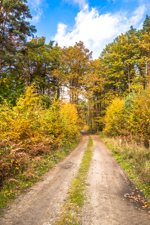 Golden autumn scenery in the forest with yellow leaves on trees and blue sky