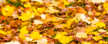 Blurry background of autumn leaves in yellow color Stock Photo