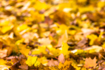 Autumn leaves background, fallen leaves on the ground, outdoor