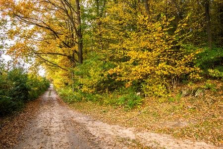 森林、自然の秋風景の田舎の道 写真素材