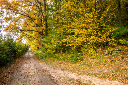 Rural road in the forest, nature in autumn, landscape