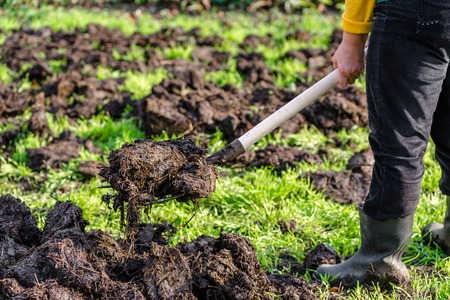 Farmer working in the garden in spring. Organic fertilization of the grass field, preparing garden for digging and planting