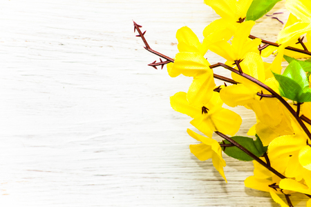 Yellow forsythia, spring flowers, background for womens day or card for mothers day