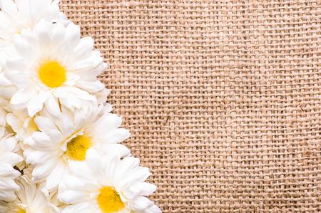 ガーベラデイジー、女性の日や母の日のためのカードのための春の背景 写真素材 - 90537755