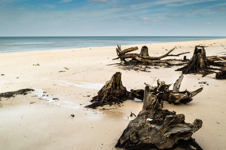 Empty beach before storm over sea. Deserted landscape and fallen tree trunks, natural state of nature, Slowinski National Park, Poland, Baltic Sea
