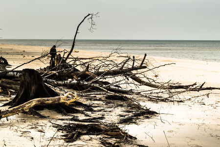 Empty beach before storm. Deserted landscape and fallen tree trunks, natural state of nature, Slowinski National Park, Poland, Baltic Sea