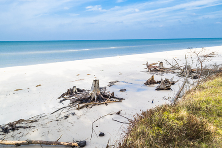 Empty beach. Deserted landscape and fallen tree trunks, natural state of nature, Slowinski National Park, Poland, Baltic Sea