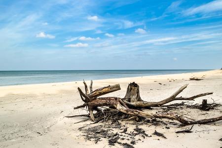 Leeg strand. Verlaten landschap en gevallen boomboomstammen, natuurlijke staat van aard, Slowinski Nationaal Park, Polen, Oostzee