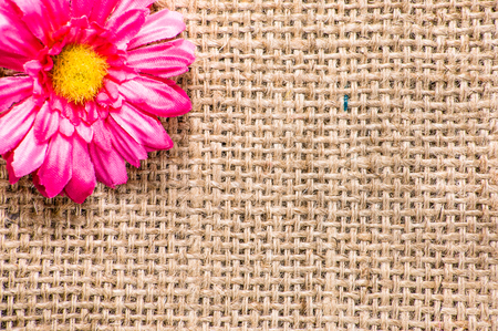 Gerbera daisy, spring background for womens day or card for mothers day