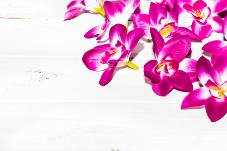 Orchid flowers, spring background for womens day or card for mothers day